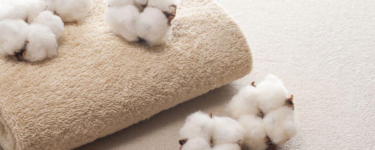 Coccole di cotone